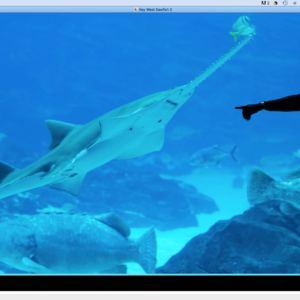 Key West Sawfish 2.jpg